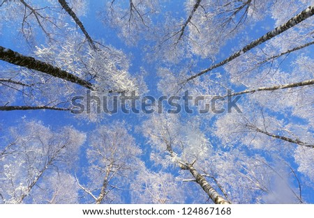A view of the beautiful blue sky through the snow-covered trees. Winter park in snow and frost on a sunny day - stock photo