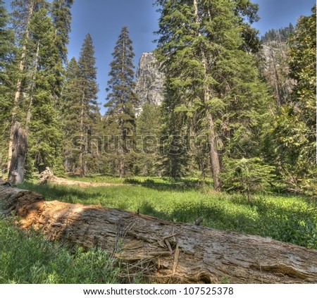A view of the forest with a granite face in the background.  This photo was taken on the trail to Topekah Falls in Sequoia National Park - stock photo