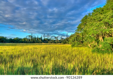 A View of the Marsh in Late Afternoon, South Carolina - stock photo
