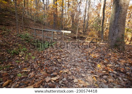 A view of  trail through a forest in North Carolina with colorful foliage in autumn - stock photo