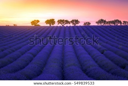 A view of tranquility in Provence Lavender Fields against a sunset