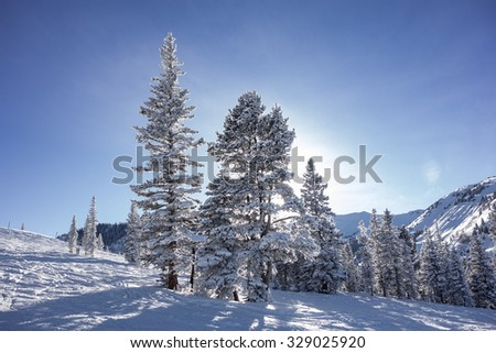 A view of trees looking up towards the sun and the top of the mountain. The light forms a halo behind the trees. - stock photo