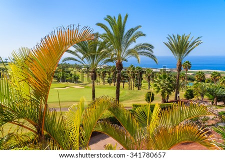 A view of tropical landscape with palm trees on Tenerife, Canary Islands, Spain