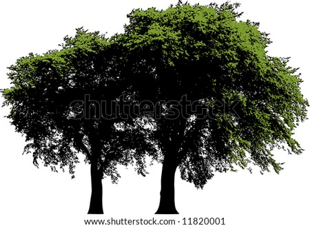 A view of two trees with fresh green leaves, isolated on a white background.