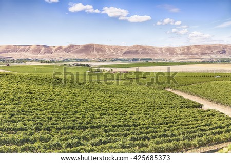 A view of vineyards on Red Mountain. Red Mountain is an American Viticultural Area (AVA) in the eastern half of Washington State.