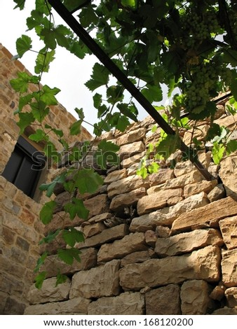 A vine growing on the roof a Lebanese village house beside an old brick wall.  - stock photo
