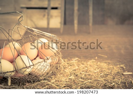 A vintage feeling image of freshly collected farm eggs in a basket in a chicken coop with copy space.