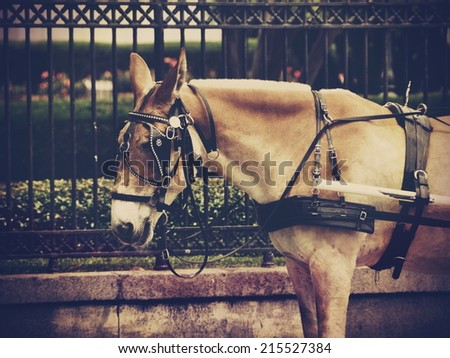 stock-photo-a-vintage-instagram-type-filtered-image-of-a-carriage-mule-odocoileus-hemionus-in-the-new-orleans-215527384.jpg