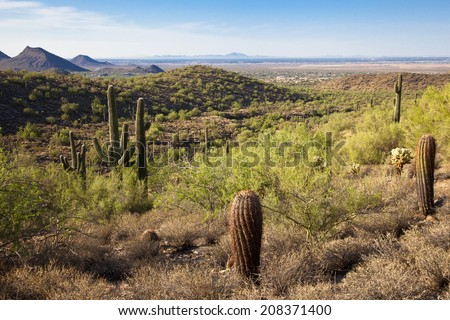 A vista in the Sonoran desert in Arizona
