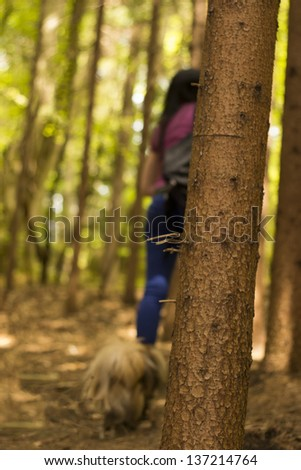 A walk in the woods with the dog/Walking in the woods - stock photo