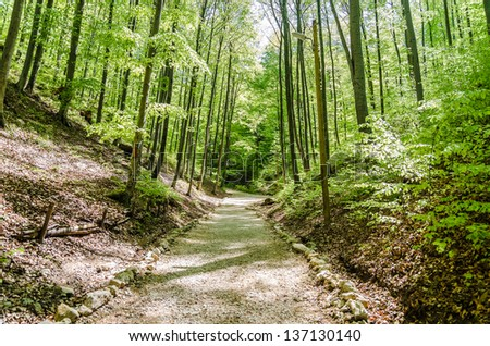A Walk Through The Forest - stock photo