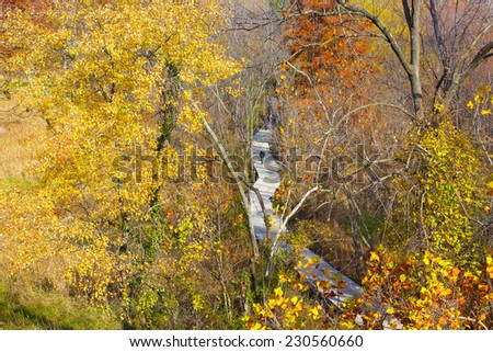 A walkway on Theodore Roosevelt Island Park and colorful trees in autumn, Washington DC. A morning stroll in the park during fall. - stock photo