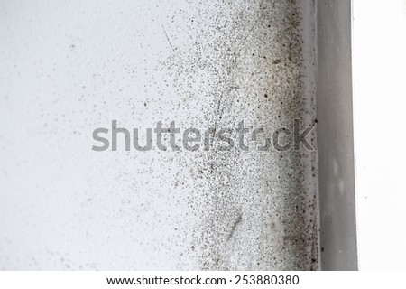 A wall with harmful, spreading black mold   - stock photo