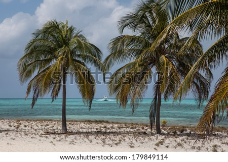 A warm breeze rustles the fronds of coconut palms growing on Halfmoon Caye, a national monument near the famous blue hole in Belize. The island is home to nesting red-footed boobies and frigate birds.
