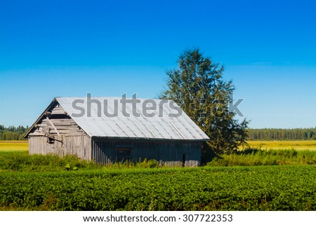 A warm summer day by the potato field and the barn house.