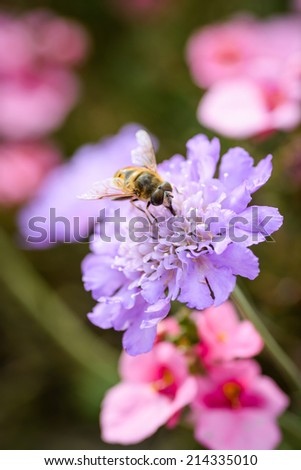 A wasp on a purple flower in an English Meadow in summertime - stock photo