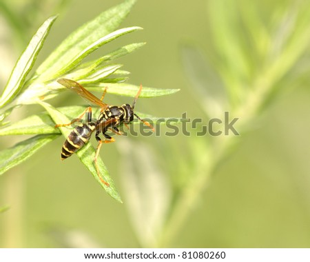A wasp perched on top of a plant leaf.