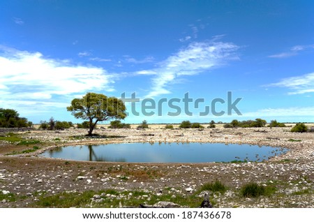 A water hole in the Etosha national park in namibia - stock photo