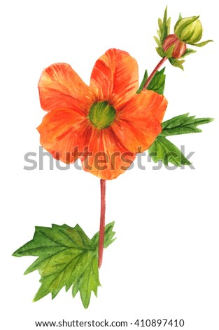 A watercolor drawing of a bright orange avens flower (Geum Coccineum 'Cooky', rose family), hand painted in watercolor in the style of vintage botanical art - stock photo