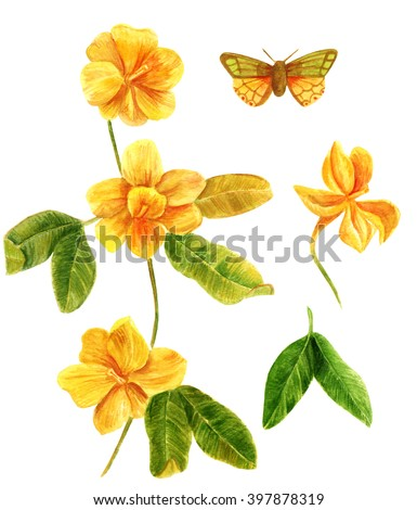 Watercolor Illustration Yellow Jasmine Flower Branch Stock ...