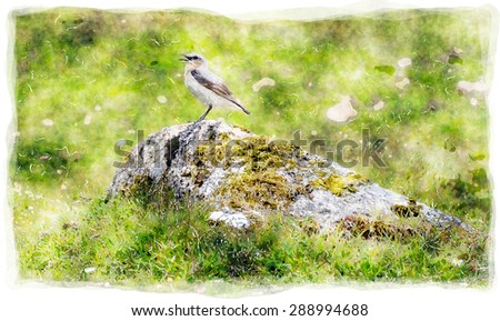 A watercolour painting of a Wheatear perched on a rock in moorland - stock photo