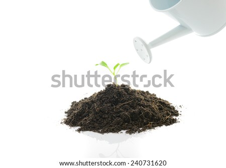 a watering can pouring water on a seedling isolated on white  background