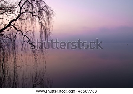 A weeping willow reflected in a lake before the dawn, mystery image