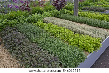 spaces herb for patterns checkerboard small garden ideas fun design popular