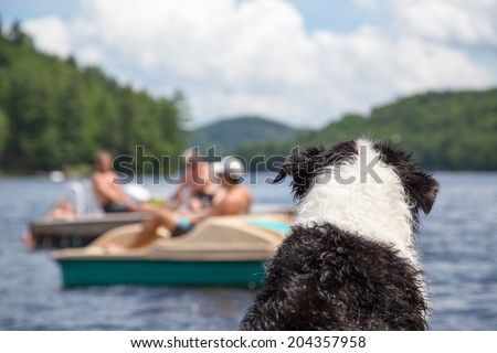 A wet dog sitting on the cottage dock watches people swimming and boating on Lake of Bays in Muskoka Ontario Canada - stock photo