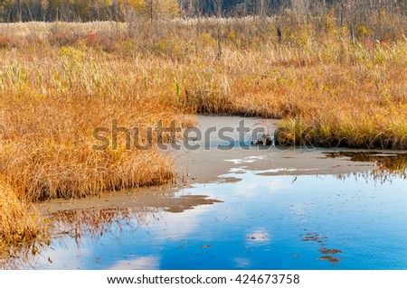 A wetland marsh in autumn on a tranquil morning reflecting the sky and clouds - stock photo