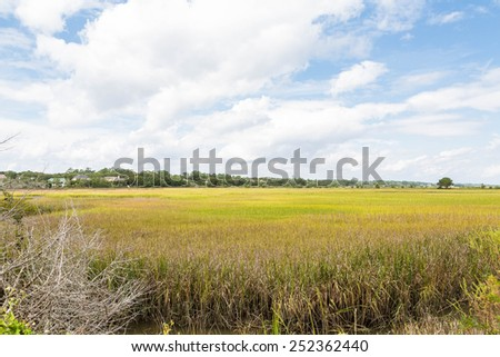 A wetland marsh with grasses and trees - stock photo