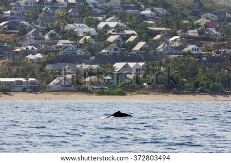 A whale in front of the village of St. Gilles on the westcoast of Reunion Island - stock photo