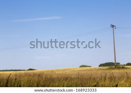 a wheat field in summer with electric pillar and blue sky.
