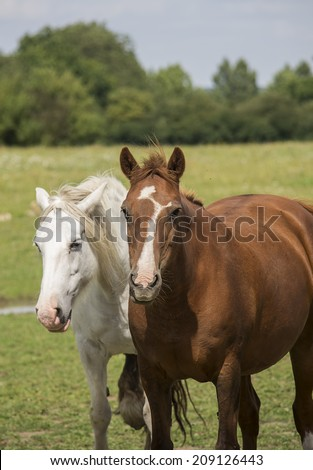 A white and a brown horse on a field.
