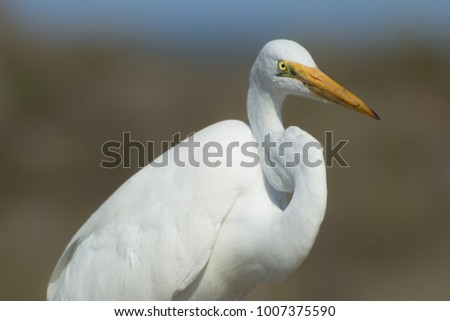 A white bird stares intensely while sitting on a beach boardwalk.