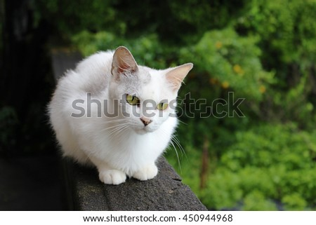 a white cat crouching down on the concrete wall