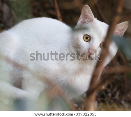 A white cat is hiding in the bushes.