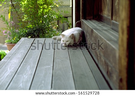 A white cat napping on a patio. - stock photo