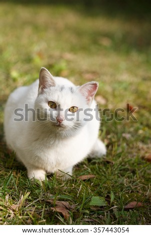 A  white cat  on the grass