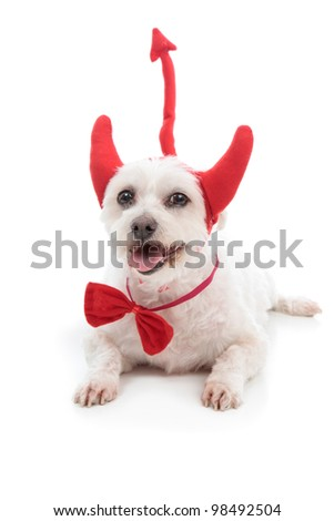 A white dog lying down with red devil horns, bow tie and tail