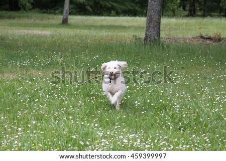 A white dog playing in the park