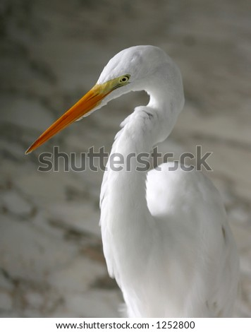 A white heron standing on a marble floor.