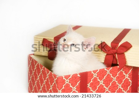 A white kitten sits inside of a gift box on a white background