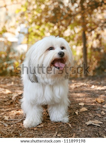 a white mixed breed dog at a public nature park - stock photo