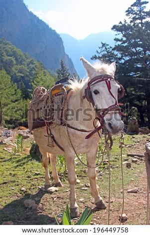 A white saddled horse on a mountain path - stock photo