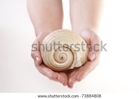 a white seashell in fingers - stock photo
