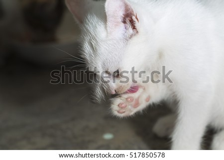 A white young cat.