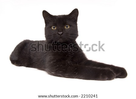 A wide angle image of a black cat laying down and looking straight ahead on a white background. - stock photo