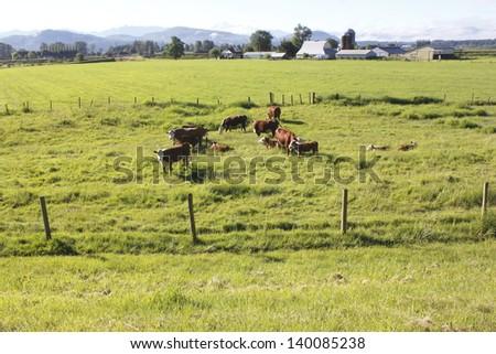 A wide open acreage prime for cattle grazing/Cattle Grazing Land/A wide open acreage prime for cattle grazing - stock photo