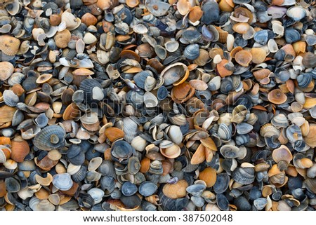 A wide variety of seashells display texture and color on a sandy beach while photographed in early morning light. Black Sea. Mamaia. Constanta. Romania. warm light.old rich colors. - stock photo